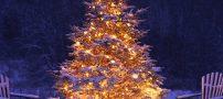 مدل تزیین درخت کریسمس 2021