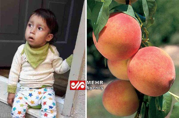 خردسالی که به همه چیز حساسیت دارد غیر از هلو ! (عکس)