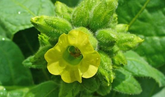معرفی شگفت انگیزترین گیاهان موجود در کره ی زمین