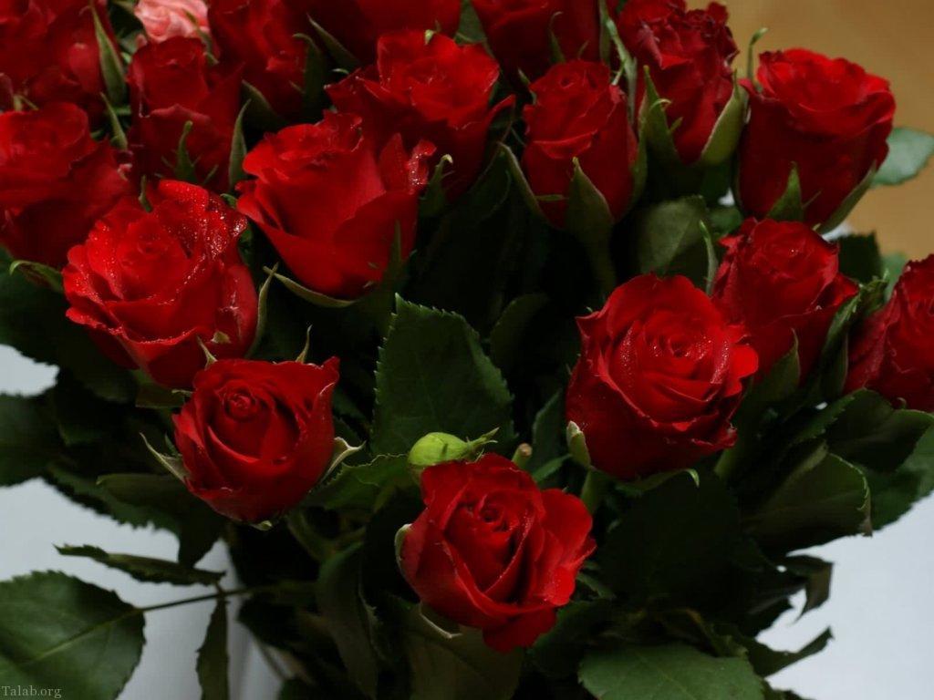 عکس گل های رز زیبا و عاشقانه