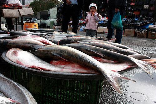 تصاویر دیدنی از بازار ماهی و میوه تازه در گیلان