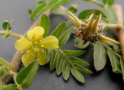 7 گیاه مفید برای ساختن اسپرم