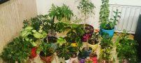 همه چیز در مورد گیاهان خانگی در منزل