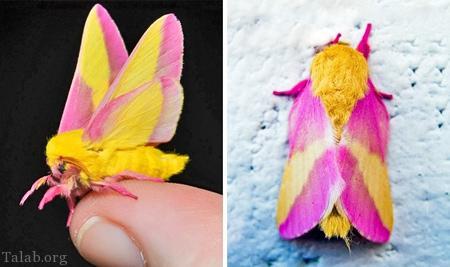 عکس های زیبا از جالب ترین حشرات دنیا