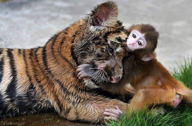 کودکانی با خلق و خوی حیوانات وحشی (عکس)