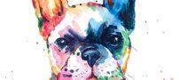 اسم حیوان سال 97 |نام حیوان سال 1397 | سال سگ