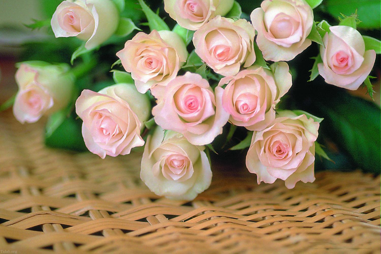 عکس گل های طبیعی و زیبا (4)