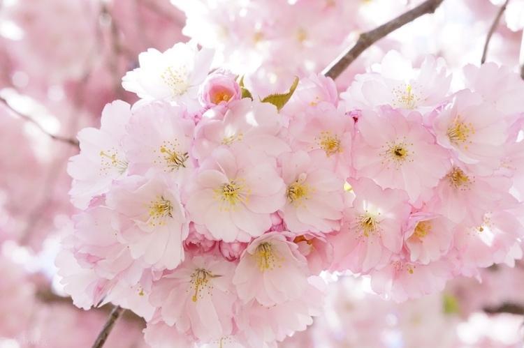 تصاویر فصل بهار با کیفیت بالا