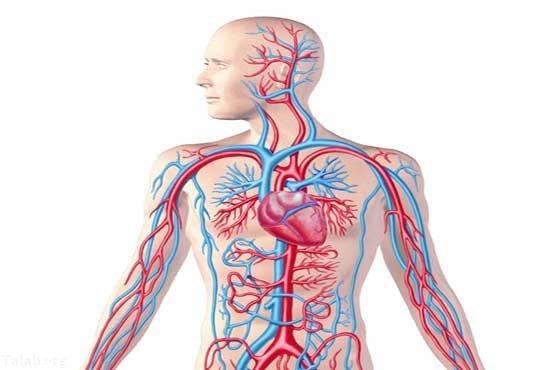 روش های غذایی برای گردش خون صحیح در بدن