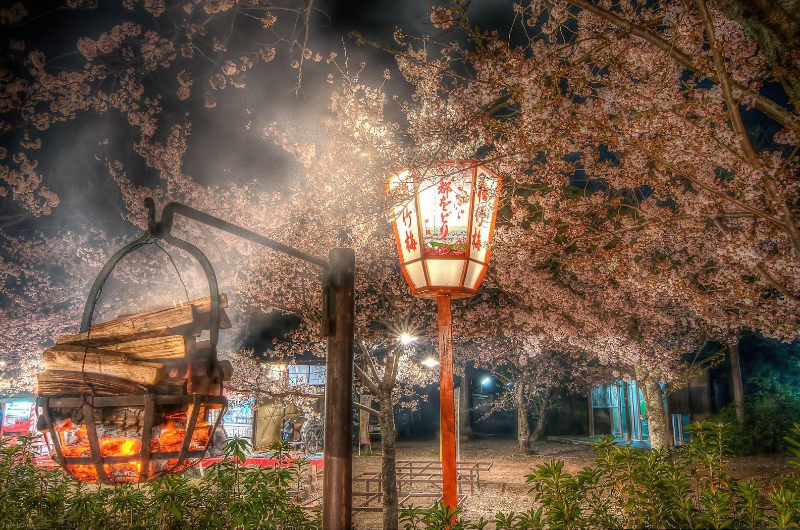 15 عکس زیبا و با کیفیت از ژاپن