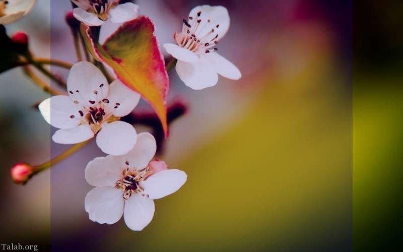 عکس های پروفایل بهاری از طبیعت   عکس طبیعت بهاری برای پروفایل