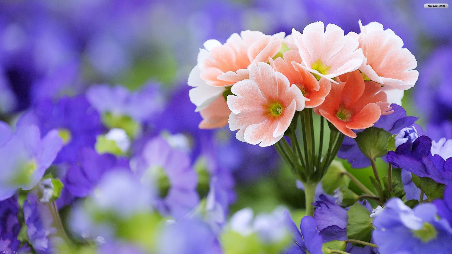 گل رز زیبا | گل های رز زیبا از همه رنگ + گل های زیبا برای پروفایل