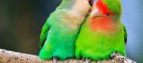 انواع ﺿﺮﺏ ﺍﻟﻤﺜﻞ ﺟﺎلب ﺣﯿﻮﺍﻧﺎﺕ | مثل های خواندنی حیوانات و پرندگان
