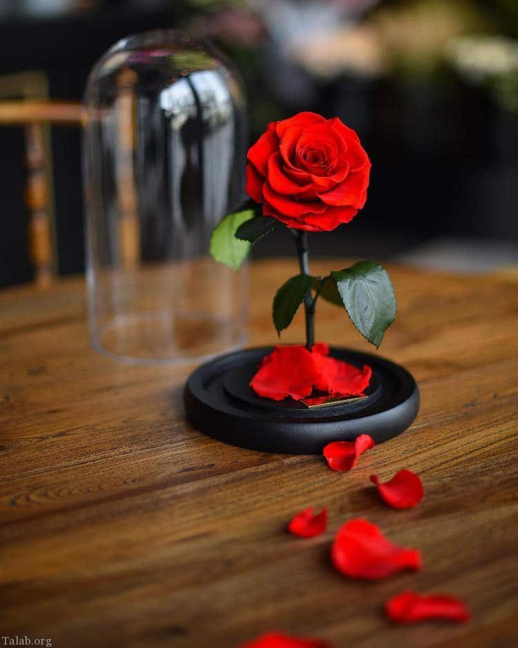 گل رز زیبا | گل های رز زیبا از همه رنگ + گل های زیبا برای