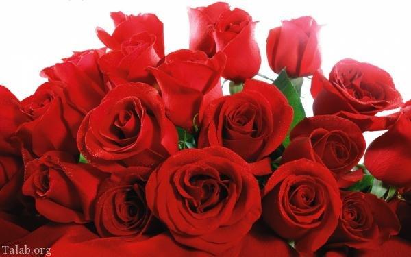 120 عکس پروفایل گل زیبا | زیباترین عکس های گل برای پروفایل