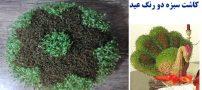 آموزش کامل انداختن سبزه دو رنگ عید نوروز