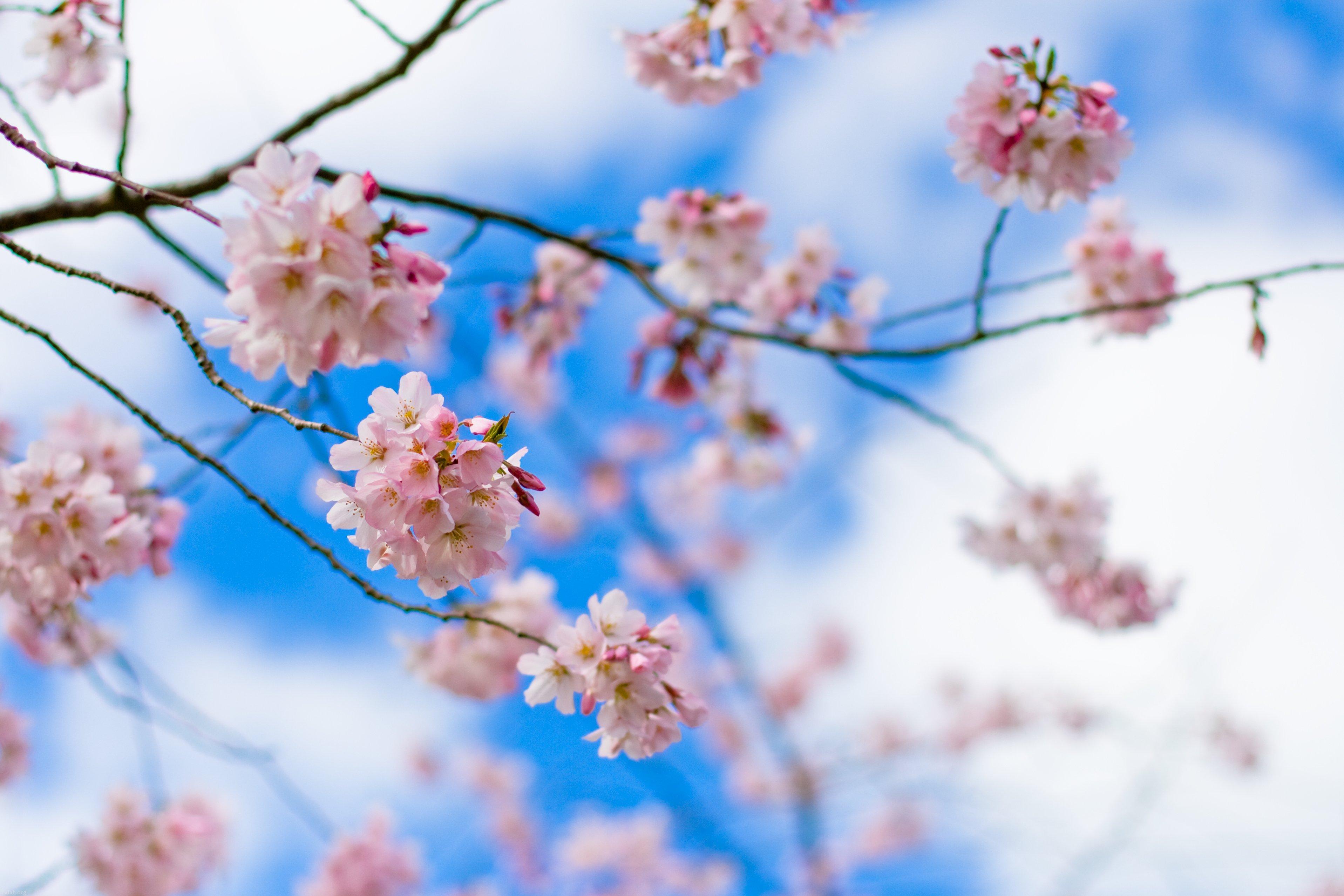 عکس های پروفایل بهاری از طبیعت | عکس طبیعت بهاری برای پروفایل