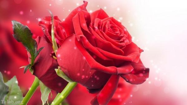 تصویر: http://www.talab.org/wp-content/uploads/2018/02/29913417-talab-org.jpg
