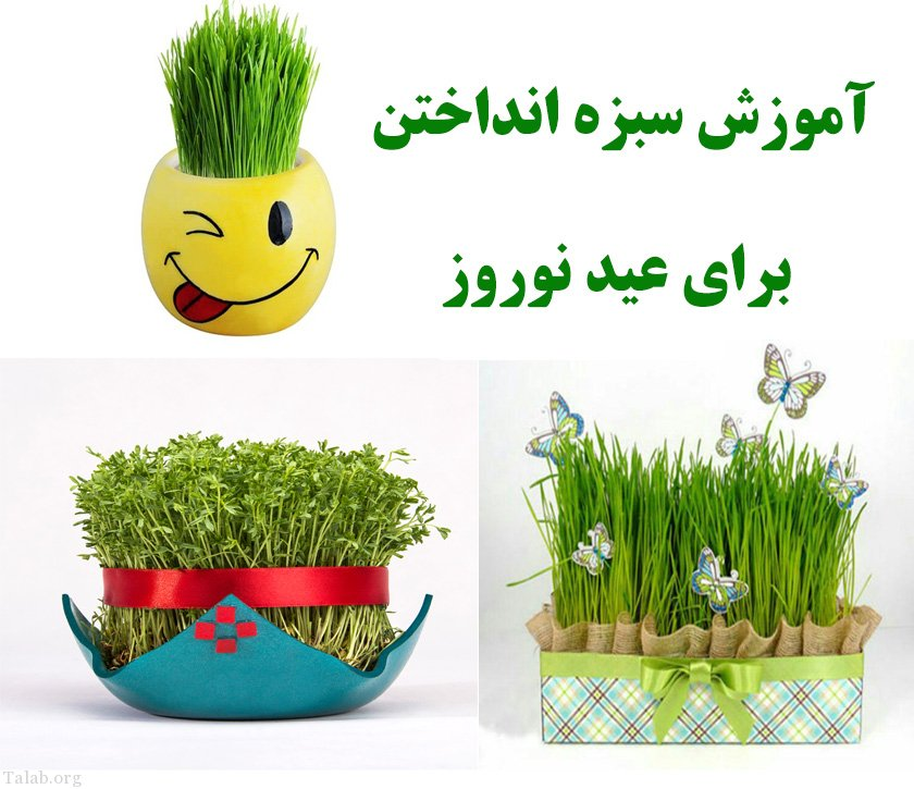 آموزش سبزه انداختن با گندم , سبزه شاهی , سبزه نارنج  و سبزه خاکشیر