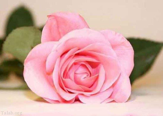 شعر روز زن   متن تبریک روز مادر ؛ زیباترین متن های تبریک روز زن و مادر