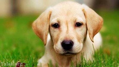 طالع بینی تمامی 12 ماه سال در سال سگ (طالع بینی سال 97)