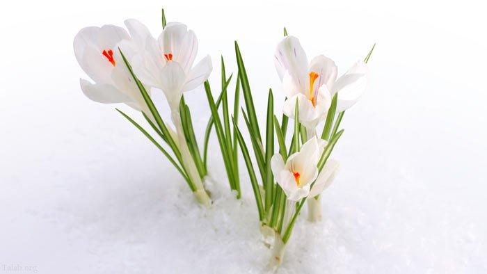 Image result for ?تصویری زیبا از گلهای تک در دشت ها و دمن ها?