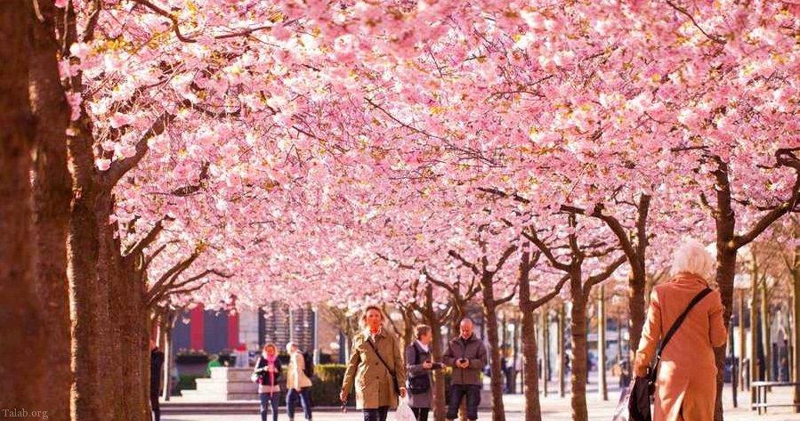 عکس هایی از طبیعت فصل بهار و شکوفه درختان و طبیعت سبز بهاری