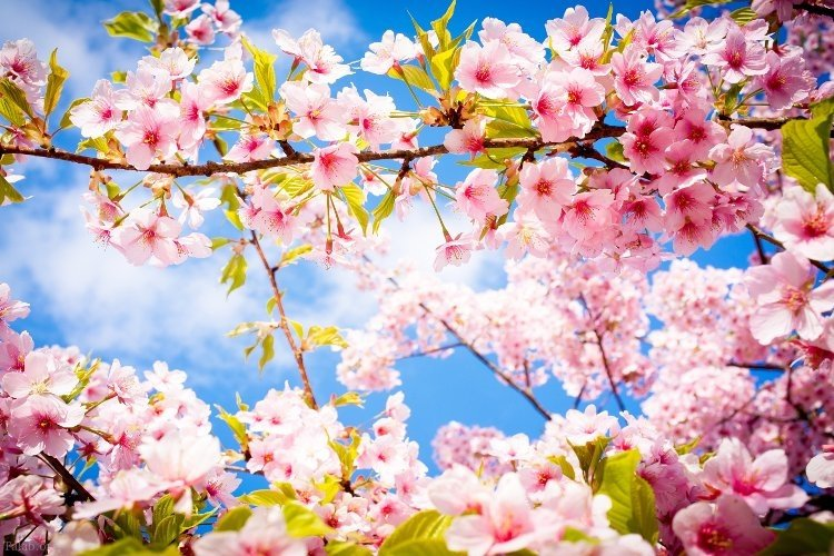 اس ام اس تبریک شروع فصل بهار 1398 | تبریک عید نوروز 98
