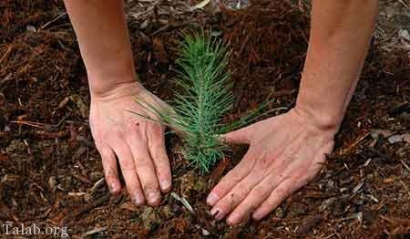 اس ام اس روز درختکاری + متن برای روز درختکاری و هفته منابع طبیعی