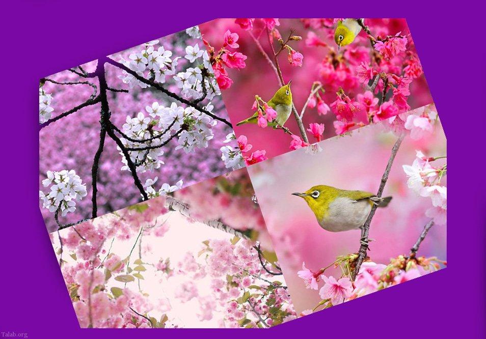 دانلود عکس زیبا از فصل بهار