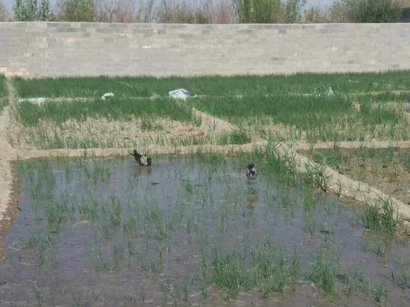 عکس های سیزده بدر روز طبیعت 13 فروردین در ایران