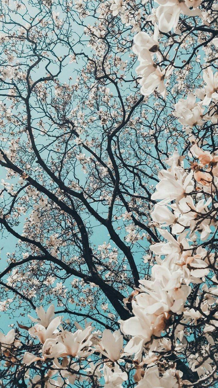 عکس های طبیعت ایران در فصل بهار (نقاط مختلف ایران)