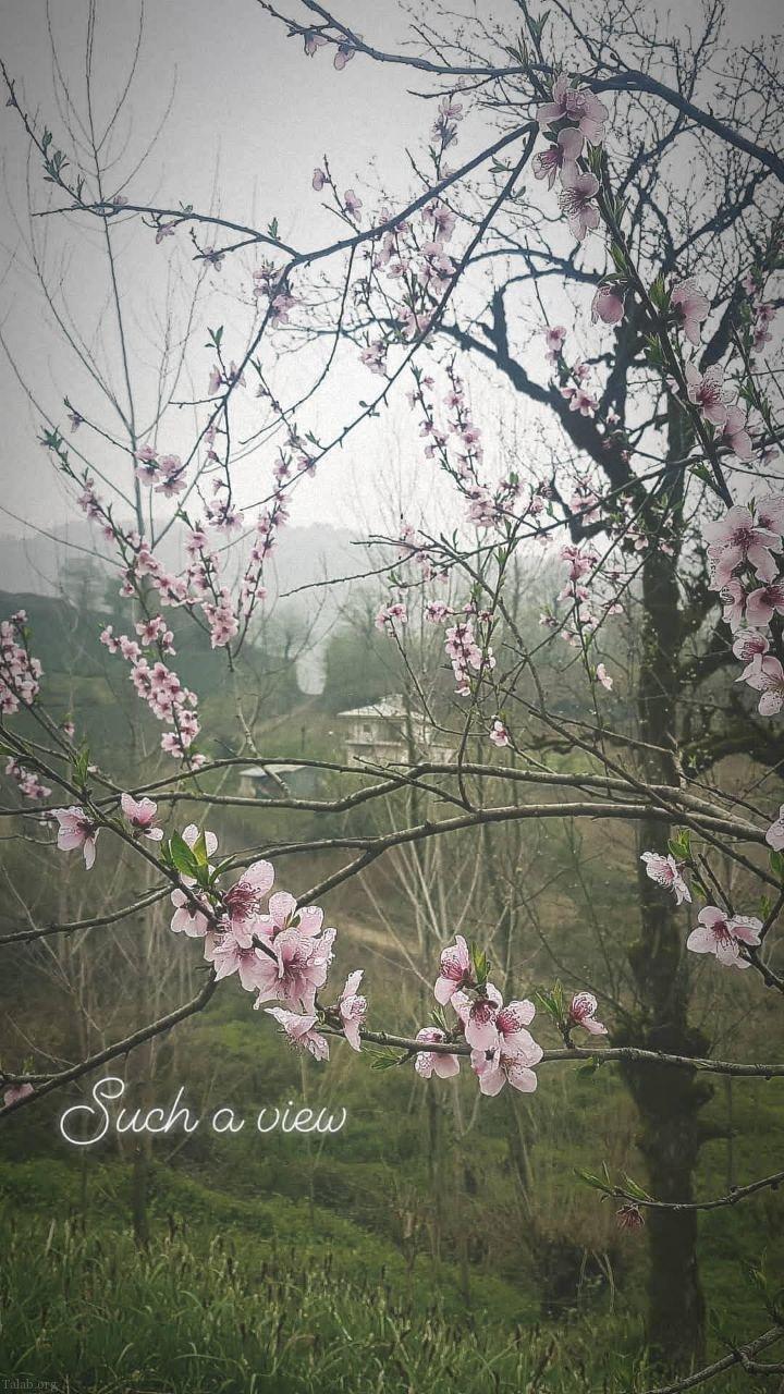زیباترین عکس های بهاری از طبیعت ایران (طبیعت در بهار)