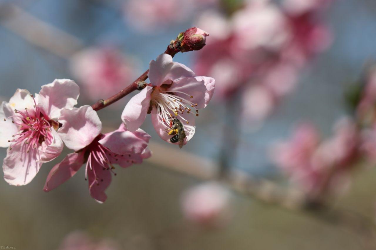 زیباترین متن های عاشقانه در بهار | شعرهای عاشقانه بهاری