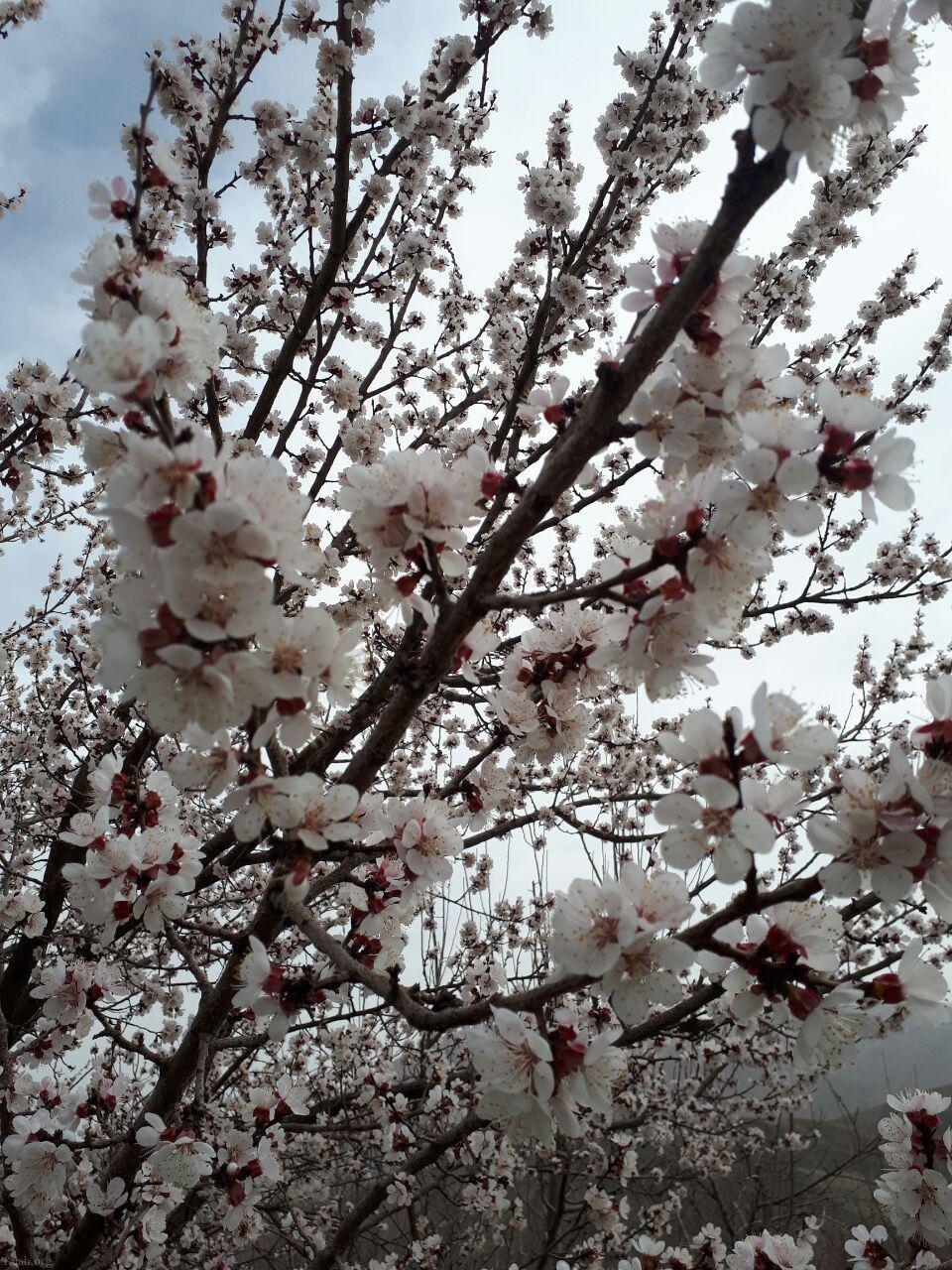 اشعار زیبای بهار | شعر کوتاه بهار | شعرهای عاشقانه بهاری