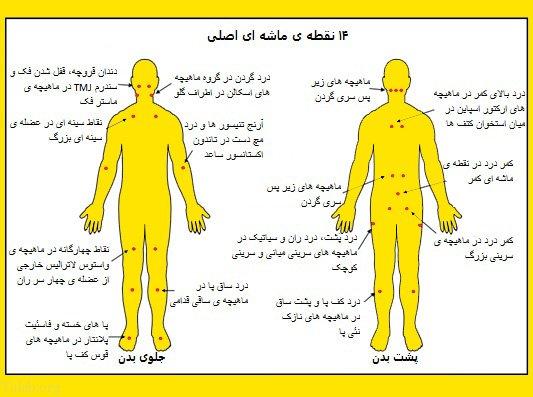 آشنایی با نقاط حساس بدن خانم ها و آقایان (ماساژ زناشویی)