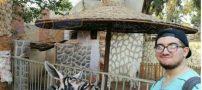 کار عجیب در باغ وحش مصر با خر (عکس)