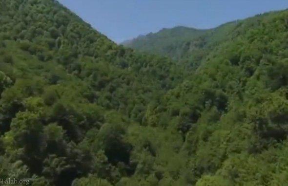 جنگل های شمال در خطر نابودی ! (کلیپ)