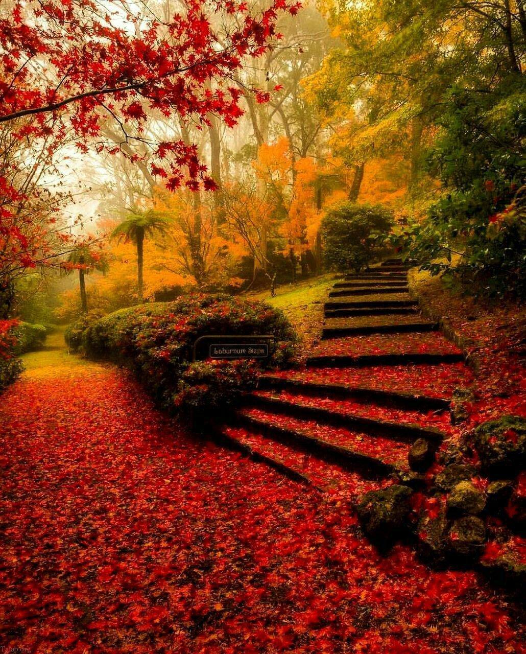 اس ام اس عاشقانه فصل پاییز | نوشته و شعر عاشقانه پاییز
