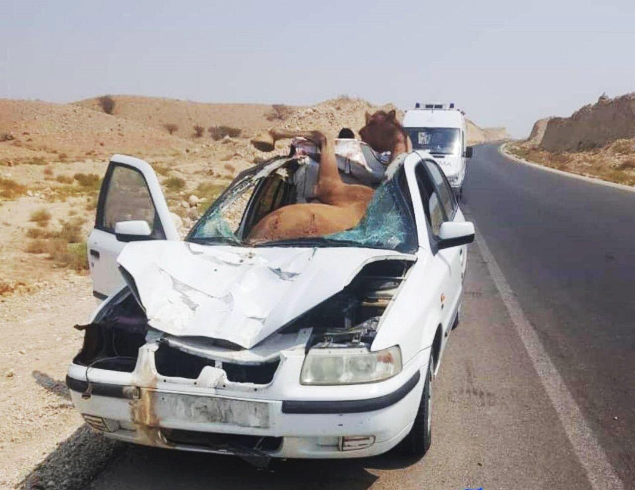 تفاوت حرکت زشت پسر جوان و اقدام زیبای امدادگر در تصادف با شتر (عکس)