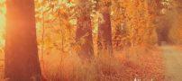 آهنگ زیبا و عاشقانه برای پاییز (کلیپ پاییز)