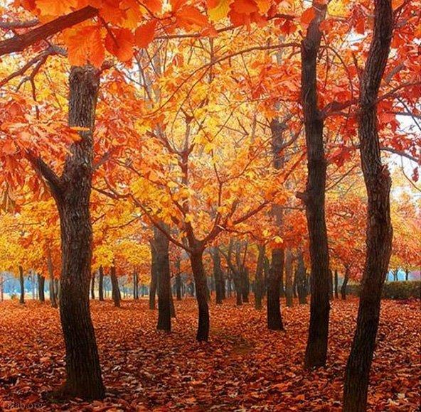 عکس پروفایل پاییز   عکس نوشته های زیبای پاییزی