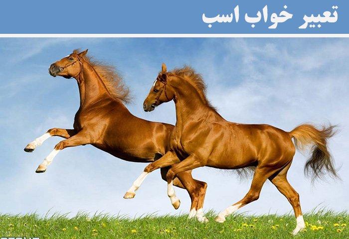 تعبیر خواب اسب | تعبیر خواب کامل اسب