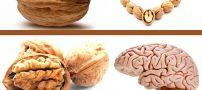 خواص گردو | فواید شگفت انگیز گردو در سلامتی پوست و مو