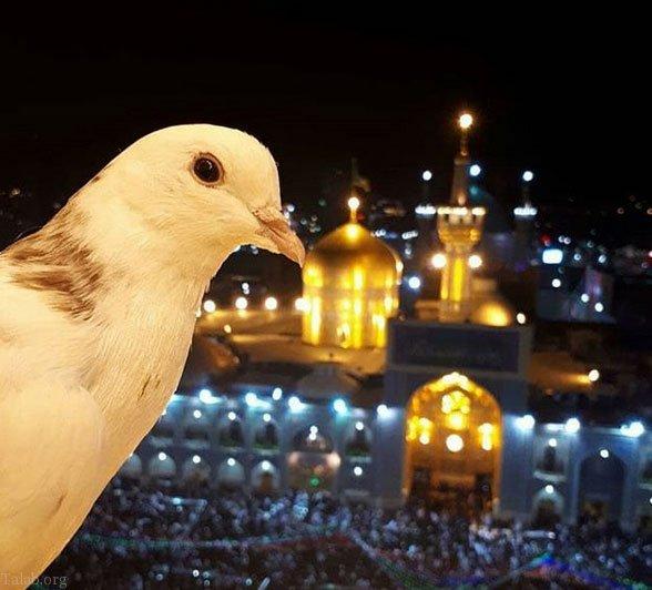 اس ام اس زیـارت امام رضا (ع) | متن زیبا برای زائر امام رضا (ع)