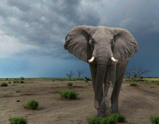 معرفی 20 نمونه از مرگبارترین و خطرناکترین حیوانات جهان (فیلم + عکس)