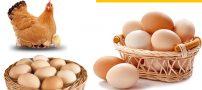 روز جهانی تخم مرغ در 8 اکتبر