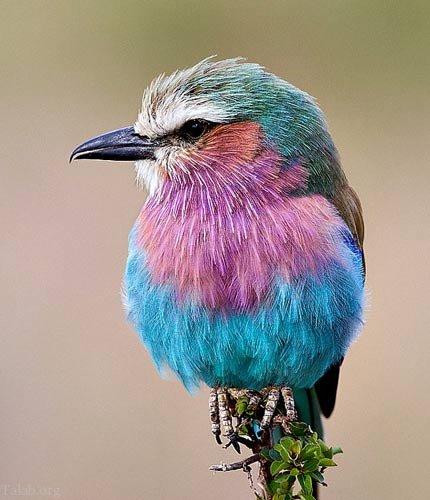 عکس هایی از عظمت خداوند در خلق رنگ های خارق العاده