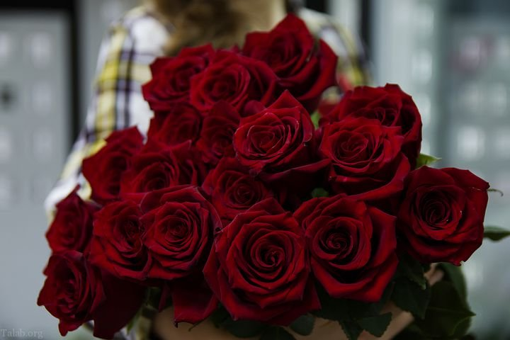 عکس های زیبای گل سرخ | عکس های گل رز قرمز زیبا