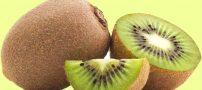 خواص کامل کیوی | مضرات مصرف کیوی و نکات مهم برای مصرف کیوی
